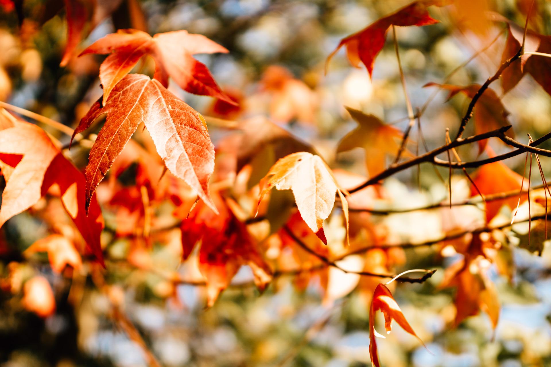 Herbstwald Saarland Fotoshooting Herbstlaub Photographie Poesie
